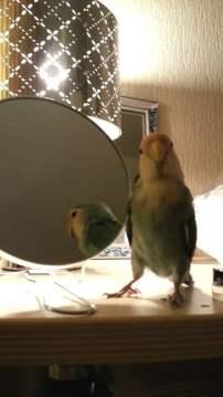 vriendje spiegel 1