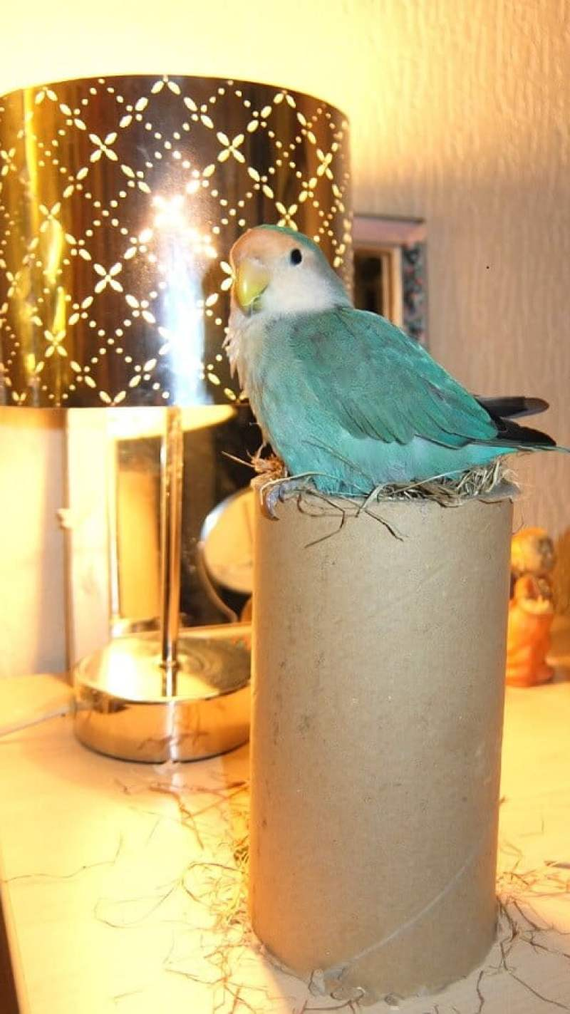 vriendje op nest