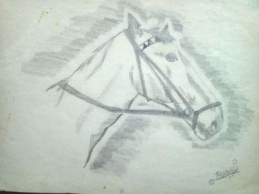 tekening babs paard(3)