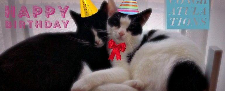 Marie en Toulouse zijn jarig! Lekker foto's kijken! 9 kittens Marie en Toulouse zijn jarig! Lekker foto's kijken!