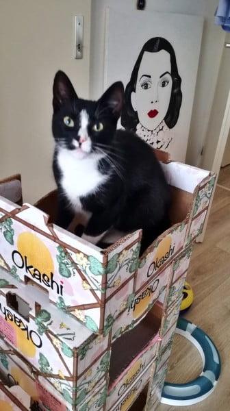 kattenflat (2)-2