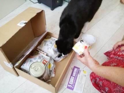 ECOstyle Kittenpakket (5)