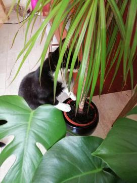 toulouse plant