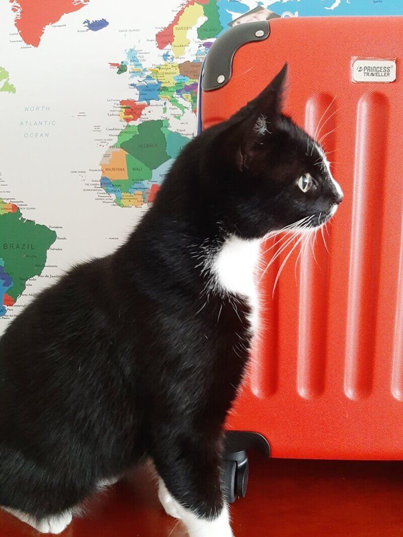 Wereldkaart? Check! Koffer? Check! Ga je mee op Reis? 25 wereldkaart Wereldkaart? Check! Koffer? Check! Ga je mee op Reis?