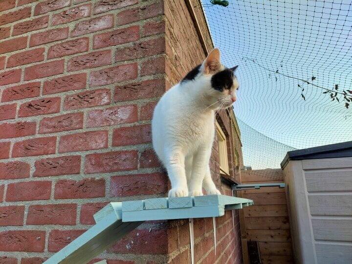 KeeK op de WeeK 35- Een kattentrap voor Marie, Kies en Kapper... 17 kattentrap KeeK op de WeeK 35- Een kattentrap voor Marie, Kies en Kapper...