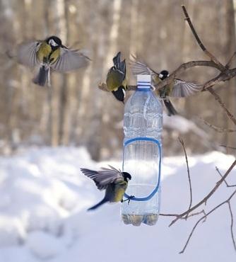Как помогать животным зимой: рекомендации, особенности кормления и ухода. Как помочь животным пережить эту зиму Рассказ как помочь животным в зимнее время