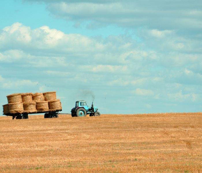 farming lesson #2: the fallow field