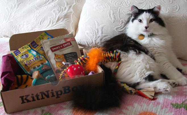 KitNip Box Subscription Box Subscription boxes for dogs pets cats | BeautyIsCrueltyFree.com