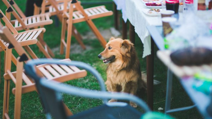 Garden Party Ahead? Here's What You Need