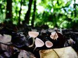 Amboro national parque (65)