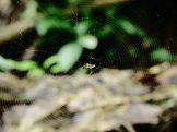 Amboro national parque (66)