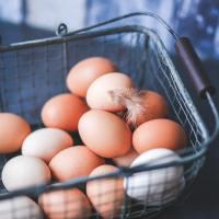 Które jajka wybrać? Chów ekologiczny, czy klatkowy?