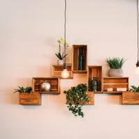 Najmniej wymagające rośliny doniczkowe do mieszkania