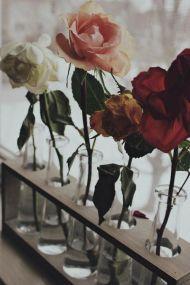 rosa-vasi
