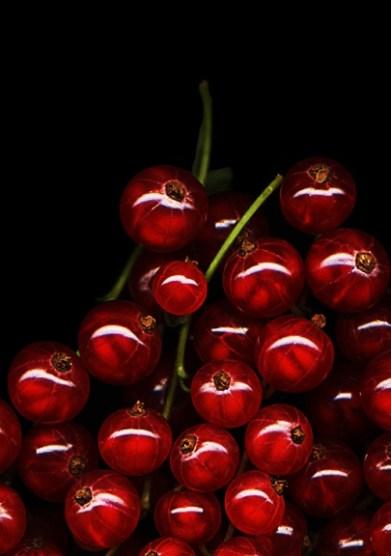 profumo-Bubblegum-Chic-ribes-rosso