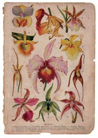 Questionario-Olfattivo-Bertrand-Duchaufour-orchidee-stampa