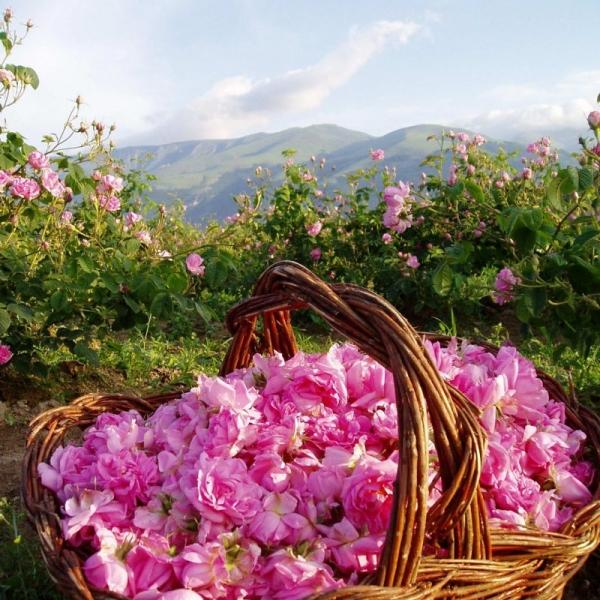 Dr-Hauschka-crema-alla rosa