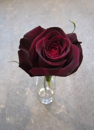 bacarra-rose-huile-precieuse-a-la-rose-noir-anti-age