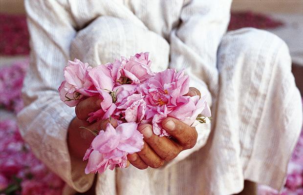 Rosa del Marocco