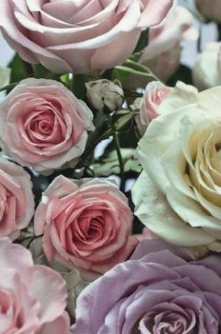 regali-di-natale-profumo-rosa-2