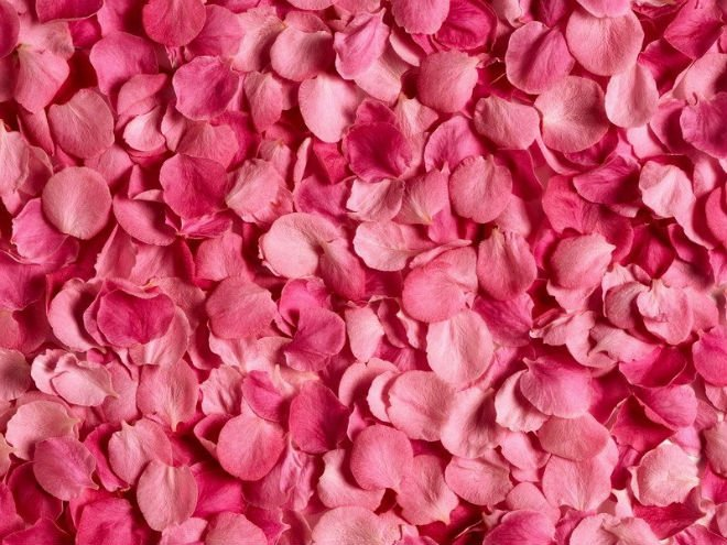 Profumo-Blanche-immortelle-Atelier-Cologne-rosa-turca