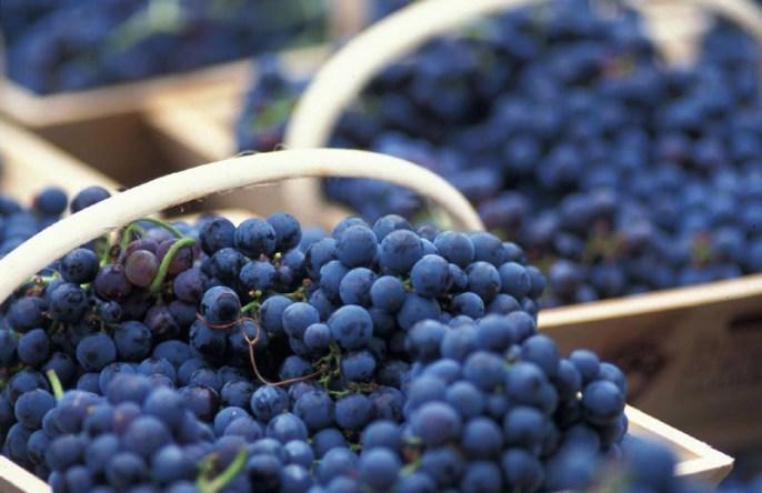 caudalie-premier-cru-the-elixir-uva