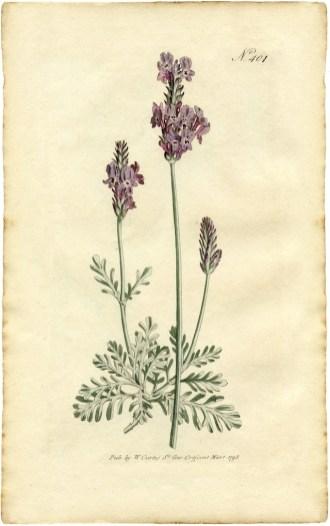 Gentlewoman-juliette-has-a-gun-romano-ricci-Lavender-Botanical-Print-GraphicsFairy-sm