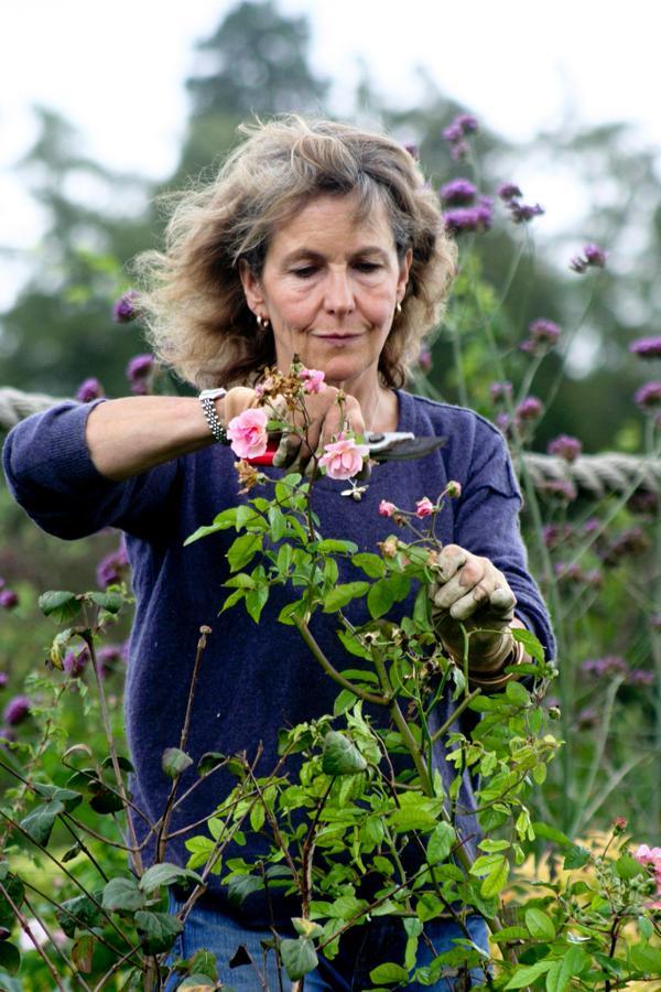 rose-rosebie Morton