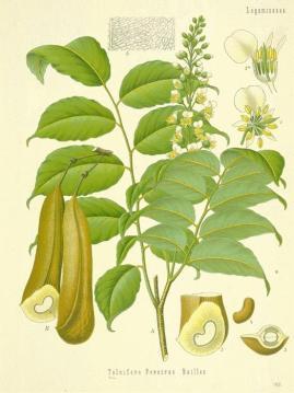 Etienne-de-Swardt-Questionario-olfattivo-balsmao-perù