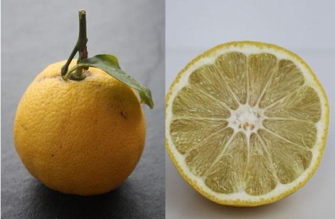 Sì-Eau-de-Toilette-ingredienti-bergamotto