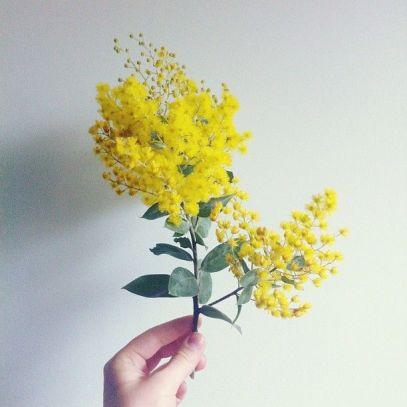 Marni-Spice-mimosa-2