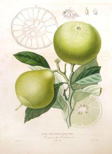 acqua-di-bergamotto-zegna-bergamotto-2