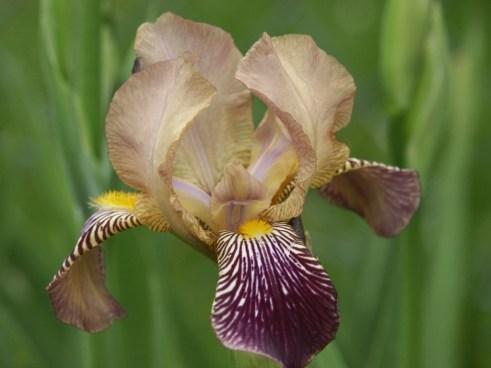 byredo-oliver-peoples-iris-2