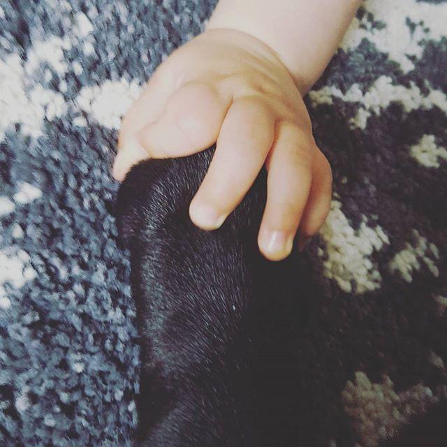Лапичка на черен мопс и ръчичка на дете