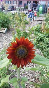 En attendant l'été au jardin de la Tour @ Maji | Beauvais | Hauts-de-France | France