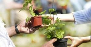 Troc de jardiniers place Jeanne Hachette @ Place jeanne hachette | Beauvais | Hauts-de-France | France