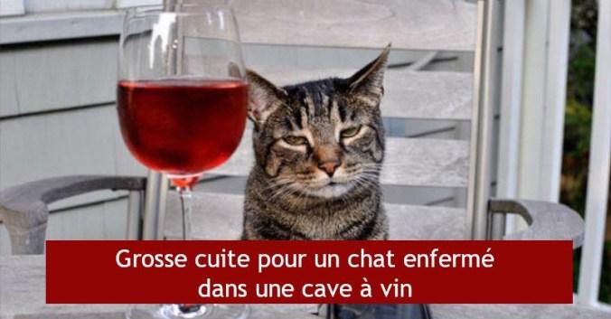 blog vin beaux-vins chat alcool vin