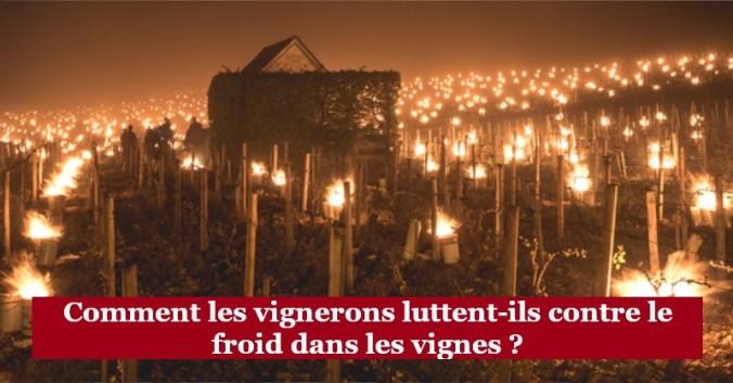 froid hiver vignes blog vin beaux-vins oenologie gelée noire