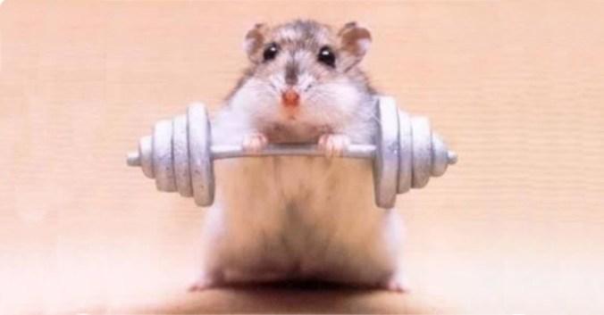 blog vin Beaux-Vins oenologie dégustation sport hamster rat souris