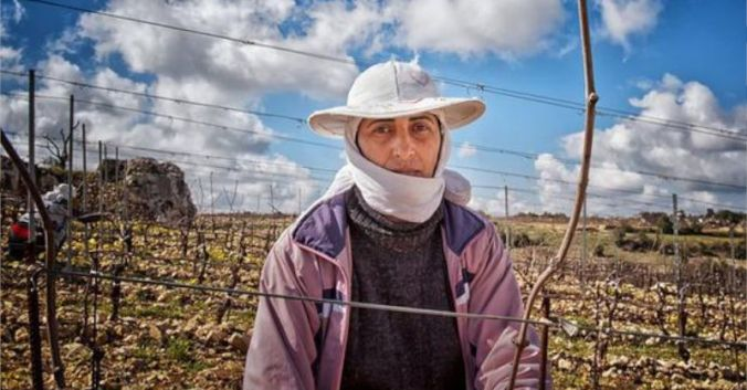 blog beaux-vins vin syrie bargylus vigne