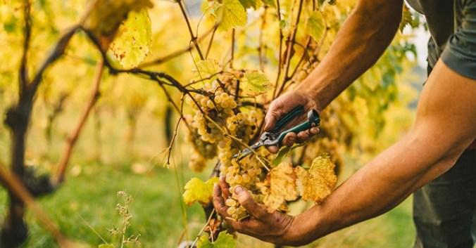 blog vin beaux-vins cepages vignoble provence