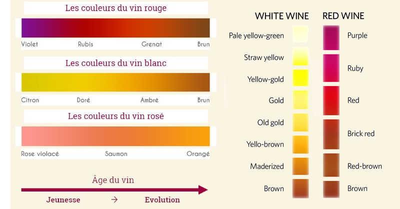 comment regarder un vin beaux vins