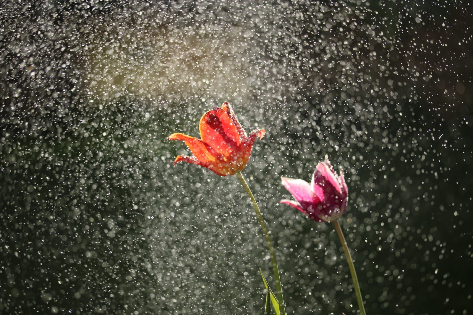 flowers in rain shower