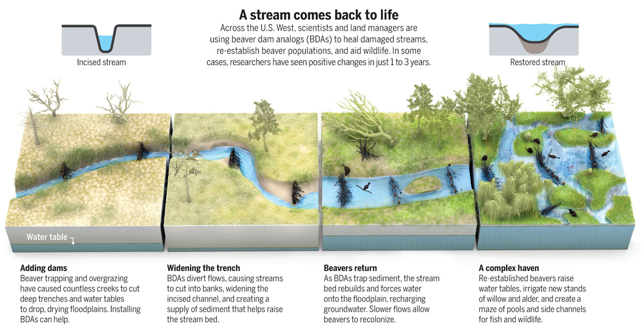 A stream comes back to life. Credit: Science Magazine