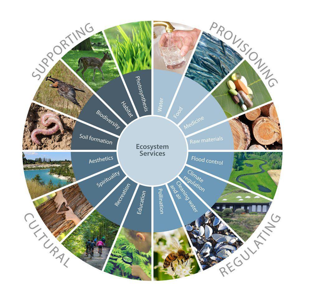 Ecosystem services. Credit: Ecology.fnal.gov