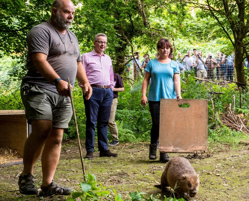 Michael Gove, Derek Gow and Roisin Campbell-Palmer release beavers. Credit: The Telegraph