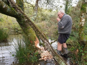 Chris Jones sniffing a beaver chip, Cornwall Beaver Project