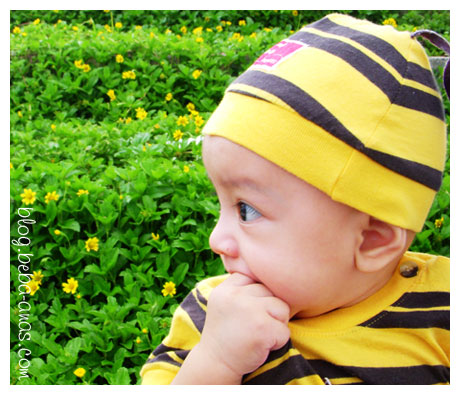 En. Alif BumbleBee in Nature