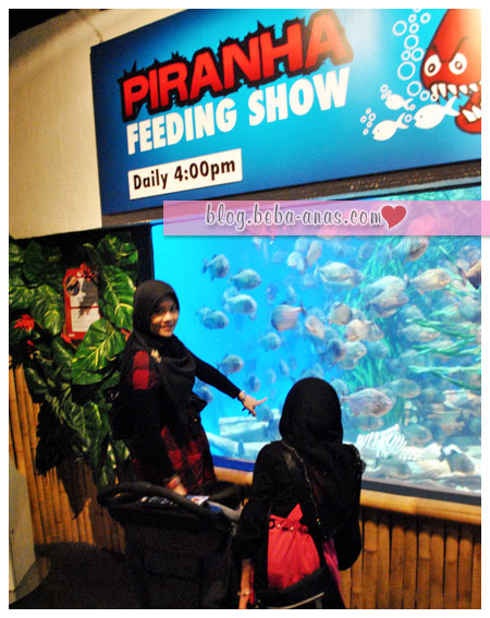 aquaria-klcc-piranha feeding