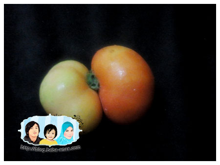 kembar tomato